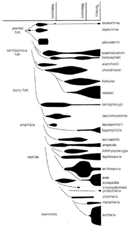 evolution and design  2